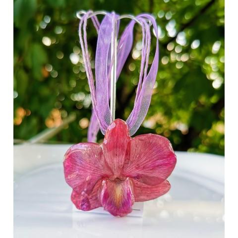 Цикламена орхидея
