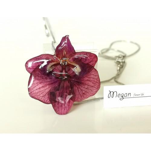Орхидея колие