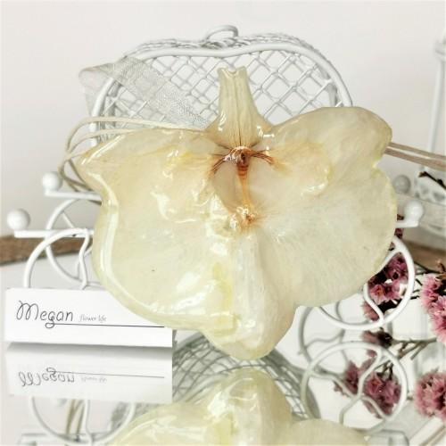 Орхидея - снежно бяла